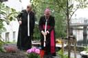 Biskopen planter en alm