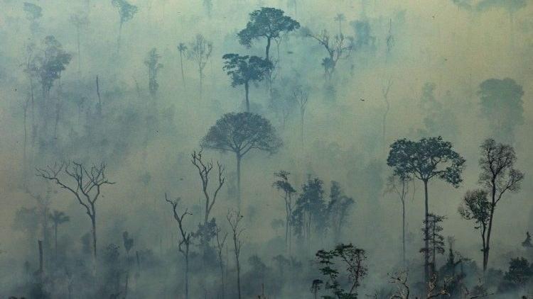 Amazonas.1.brann.jpeg