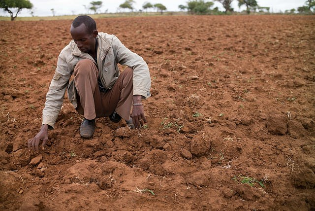 Failed-crops-after-drought-in-Ethiopia-Joshua-Smith-Caritas-Switzerland.jpg
