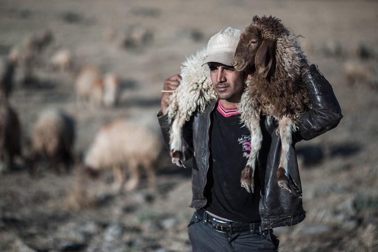 sheep-5605251_960_720.jpg